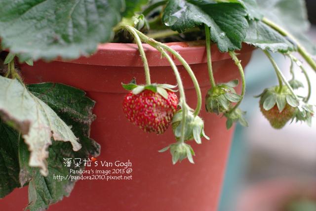 2013.03.03-小草莓n9