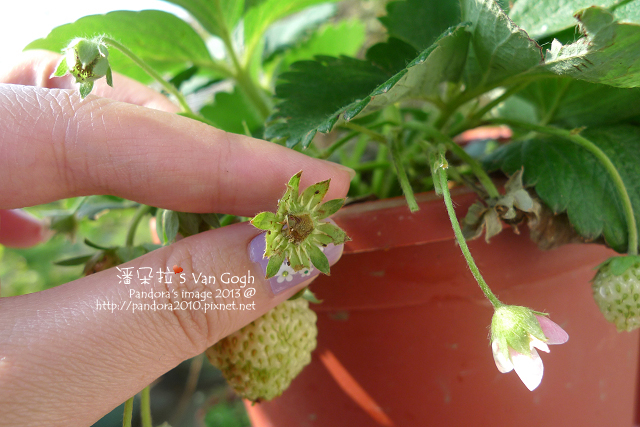 2013.03.09-小草莓