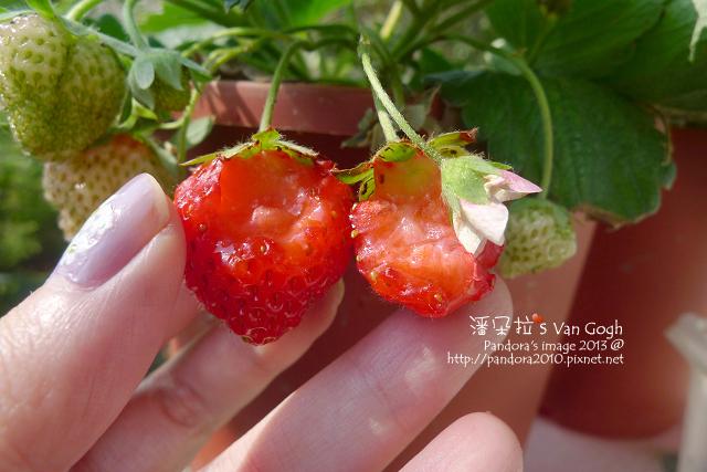 2013.03.09-小草莓n10、n11