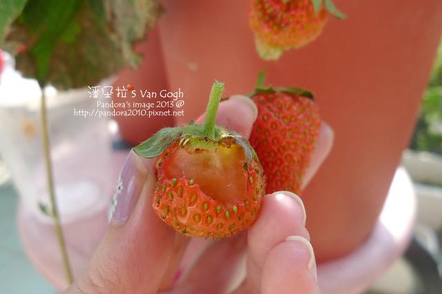 2013.03.09-小草莓n12-