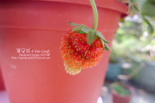2013.03.09-小草莓n13