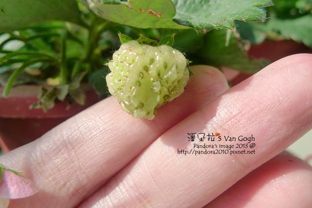 2013.03.09-小草莓n14
