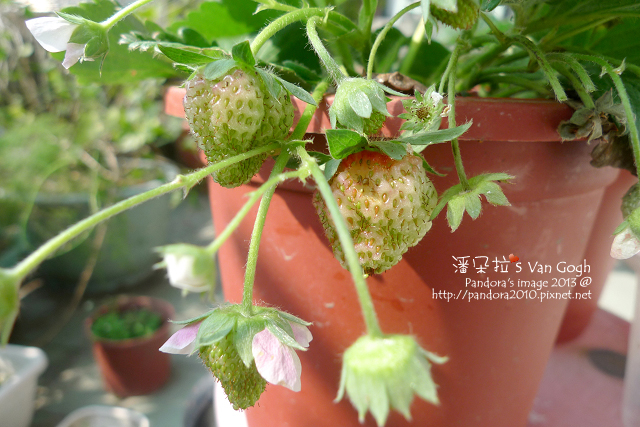 2013.03.09-小草莓n15、n16、n17