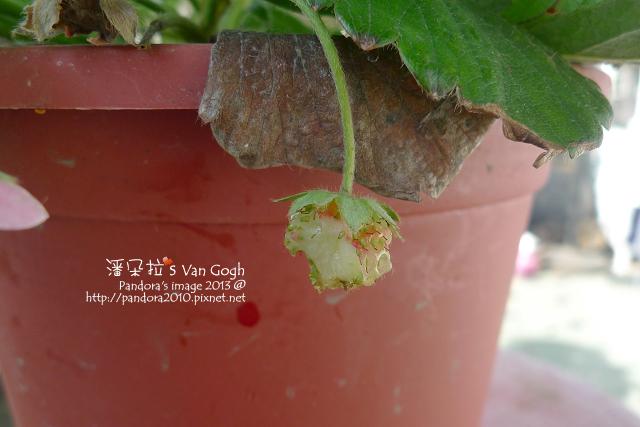 2013.03.10-小草莓n14