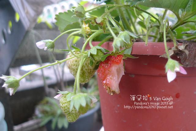 2013.03.11-小草莓n15-