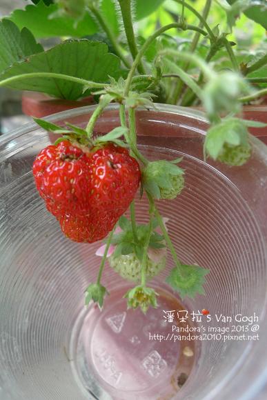 2013.03.15-小草莓n16、n17