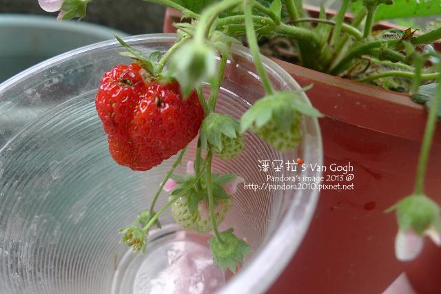 2013.03.15-小草莓n16、n17-