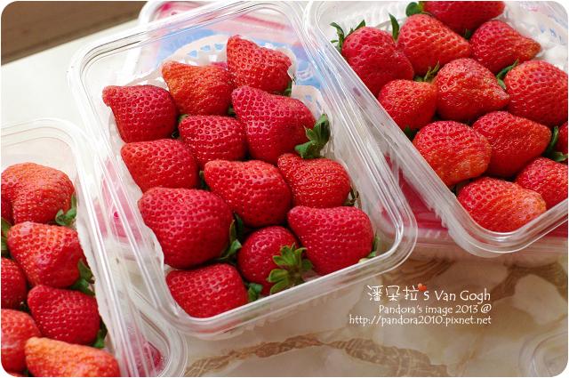 2013.03.19-(自家農莊)溫室草莓