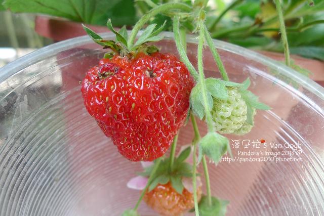 2013.03.17-小草莓n16