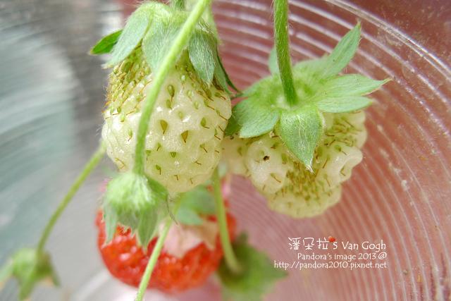 2013.03.19-小草莓n18、n19