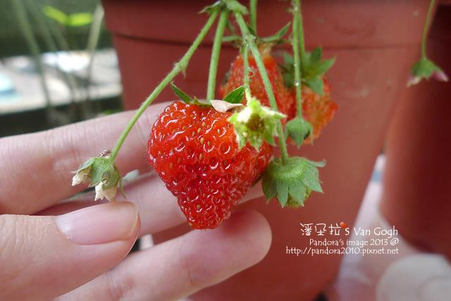 2013.03.22-小草莓n17