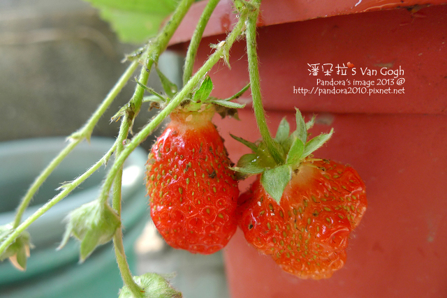 2013.03.22-小草莓n18、n19