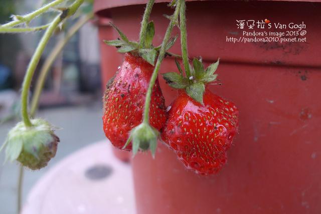 2013.03.26-小草莓n18、n19