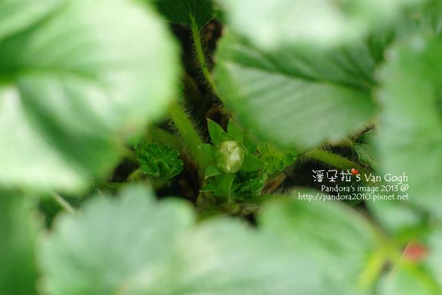 2013.04.05-小草莓-