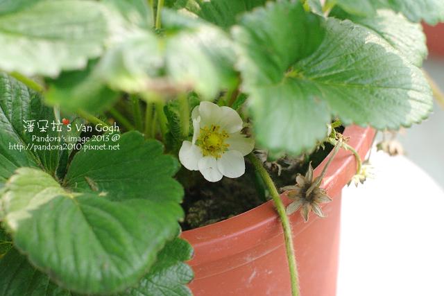 2013.04.08-小草莓-
