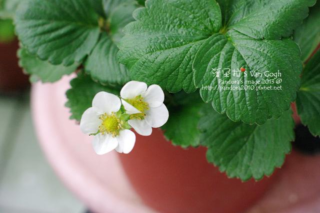 2013.04.14-小草莓
