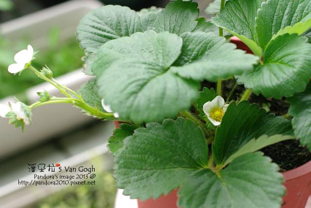 2013.04.16-小草莓-