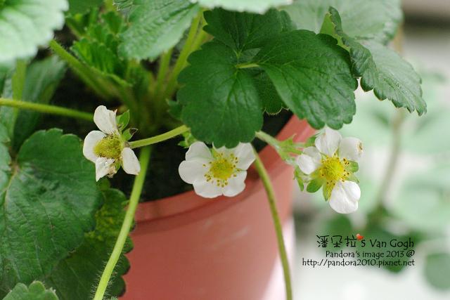 2013.04.16-小草莓-3