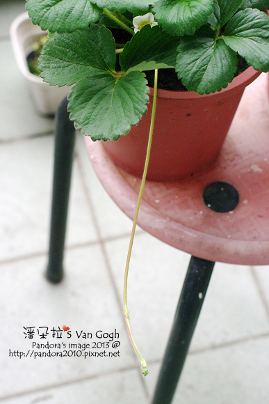 2013.04.16-小草莓-4