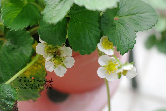 2013.04.18-小草莓-