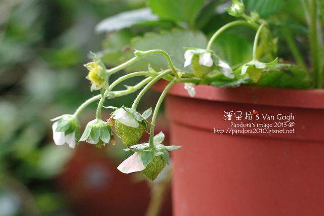 2013.04.21-小草莓