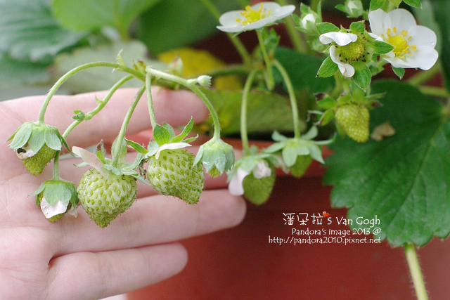 2013.04.25-小草莓