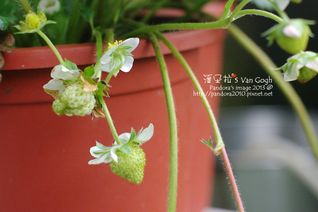 2013.04.25-小草莓2