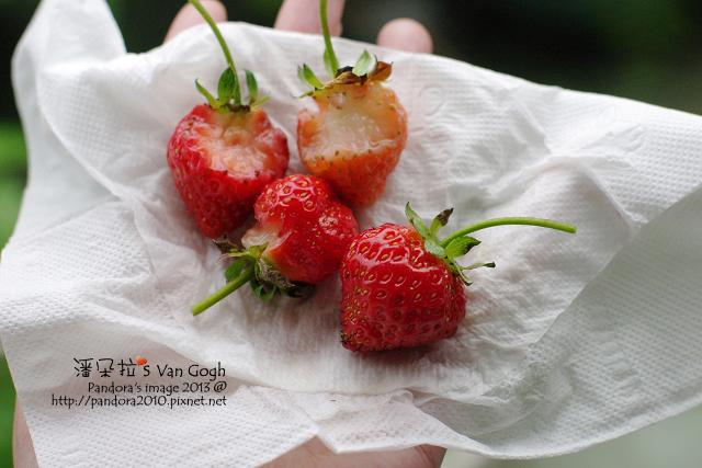 2013.05.05-小草莓