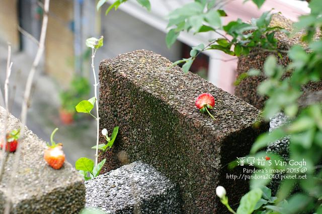 2013.05.05-小草莓-
