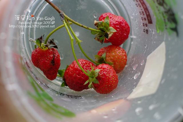 2013.05.09-小草莓