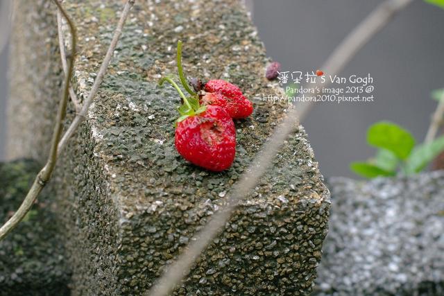 2013.05.09-小草莓-
