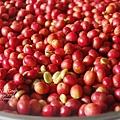 2012.11.09-咖啡豆.jpg