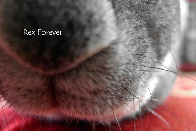 Rex Forever