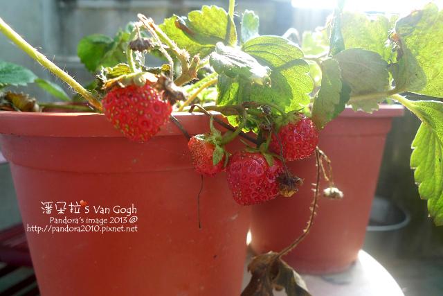 2013.06.19-小草莓.jpg