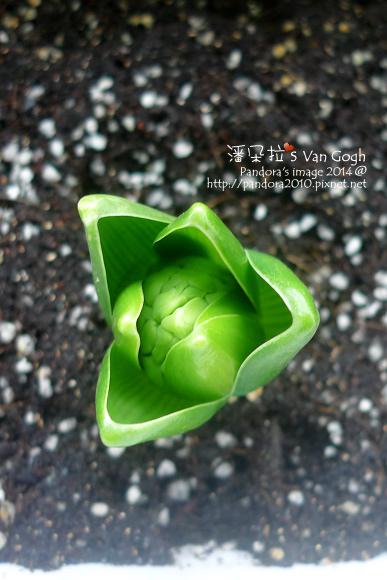 2014.01.20-風信子No.3-3.jpg