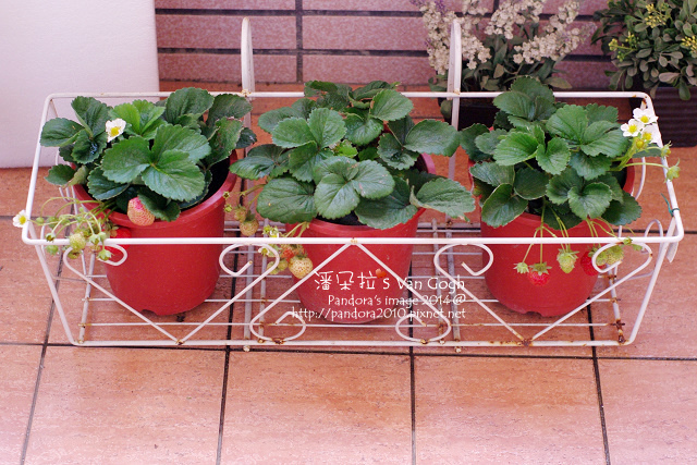 2014.01.15-小草莓.jpg