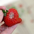 2014.01.16-小草莓.jpg