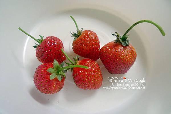 2014.01.20-小草莓.jpg