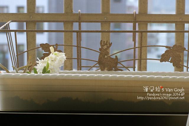 2014.01.25-風信子.jpg