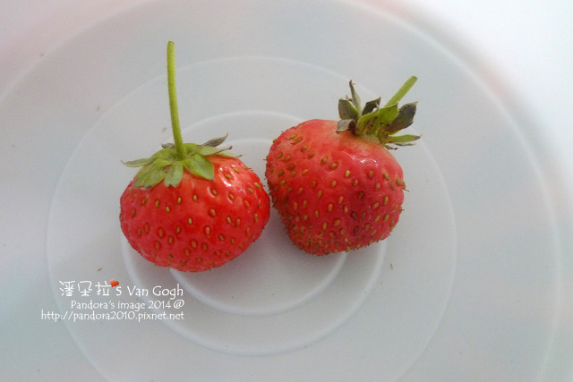 2014.02.01-小草莓.jpg