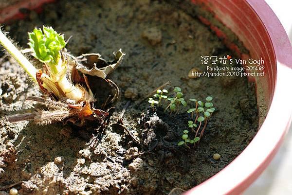 2014.02.24-小草莓No.6-2.jpg