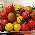 2014.02.28-自家莊園。三色小蕃茄.jpg