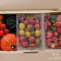 2014.02.28-自家莊園。南瓜、蕃茄、草莓-.jpg