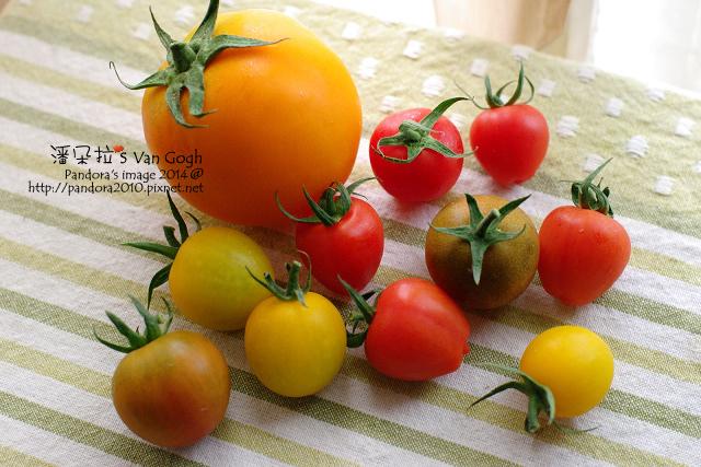 2014.02.28-自家莊園。蕃茄.jpg