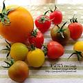 2014.02.28-自家莊園。蕃茄-.jpg