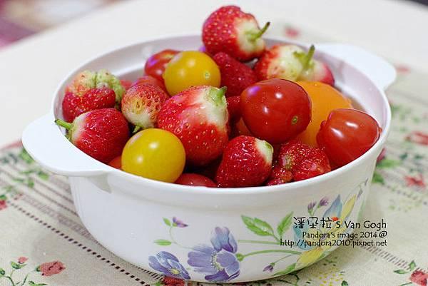 2014.02.28-自家莊園。蕃茄、草莓-3.jpg