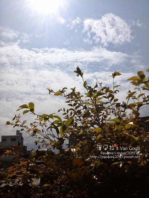 2015.02.16-仰望午時的天空.jpg