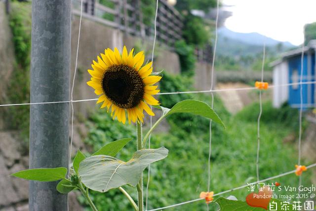 2015仲夏,我在自家莊園當農青。