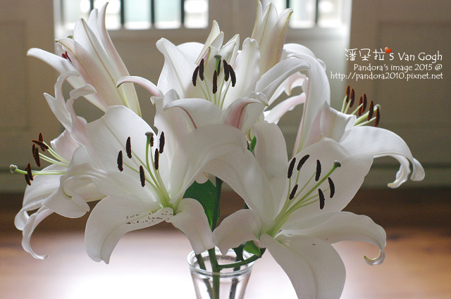 2015.08.25-粉百合-節奏-.jpg