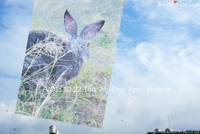 2015.10.22-My Dear Rex.jpg